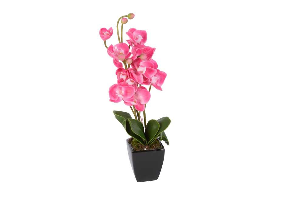 Orchid in pot, H-41cm